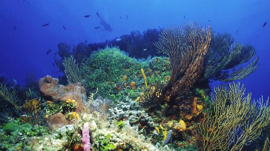 tulum reef.png